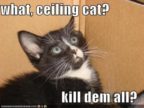 funny-pictures-ceiling-cat-tells-kitten-to-kill